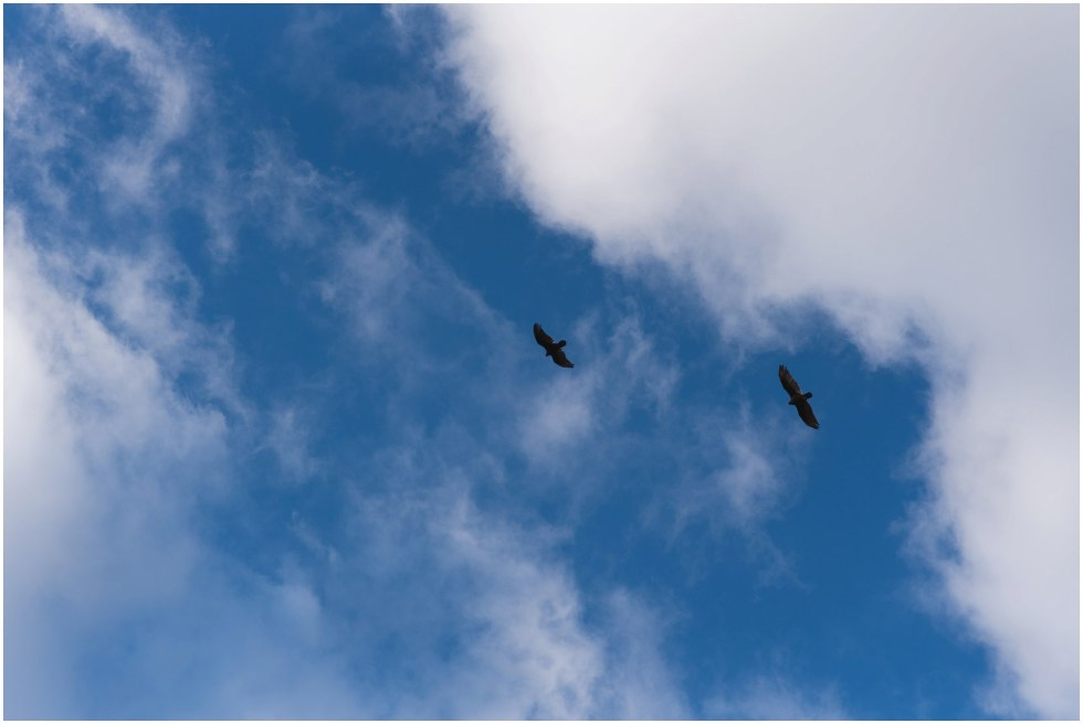 two birds flying in Hilton Falls Conservation area