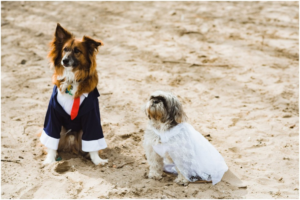 two dogs on a beach sitting next to each other, one dog wearing blue suit with red tie and the other dog wearing white dress