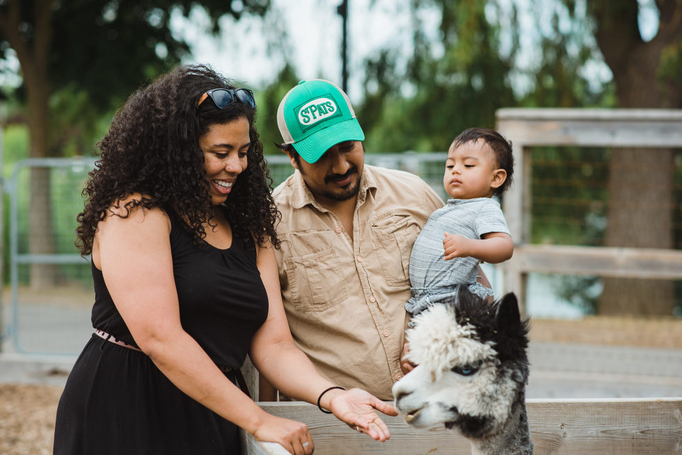 mother and father hold son in front of a llama at petting zoo
