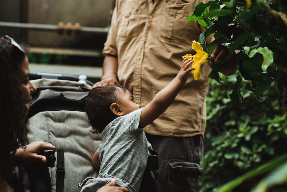 mother and father watch as young child reaches out to touch yellow flower
