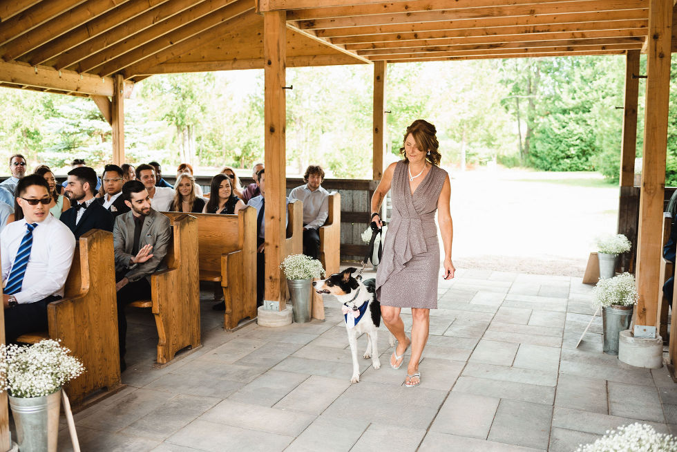 mother of the bride walking their dog down the aisle as wedding guests watch from their seats under wooden beam roof at Carver cottage in Toronto